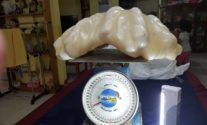 Filipino Fisherman May Have Kept the World's Largest Pearl Under His Bed for Years Without Realizing It